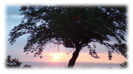 夕焼けと大きな木
