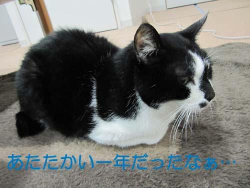 20110101-IMG_1373.jpg