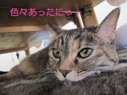 20110101-IMG_1465.jpg